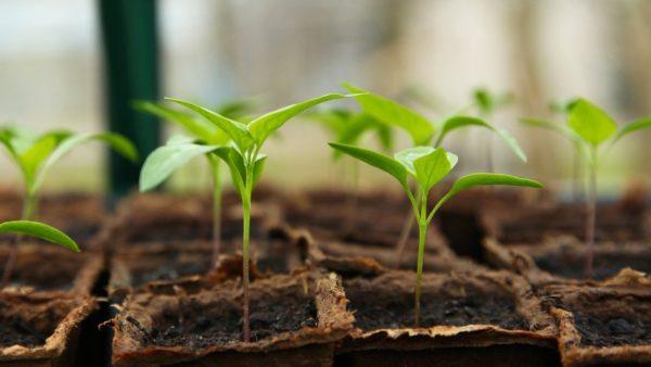 Kiedy sadzić warzywa w ogrodzie?